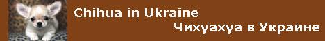 Питомник маленьких собак Чихуахуа в Украине: продажа щенков, фотографии, статьи.